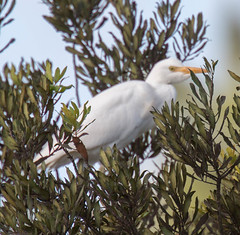 _C5A3885.jpg (Lake Worth) Tags: bird nature birds animal animals canon wings wildlife feathers sigma waterbird wetlands everglades waterbirds southflorida 2xextender