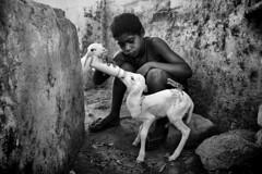 (Tarcisinho) Tags: boy people bw animal canon milk kid gente farm pb cear criana ram menino babybottle fazenda nordeste t3i carneiro serto mamadeira leite quixeramobim tarcsiofilho