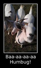 Baa-aa-aa-aa Humbug (AmigaDragon) Tags: poster goats humbug demotivational