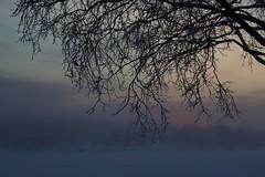 Northern Sunrise / Amanecer en el Norte (Jos Rambaud) Tags: winter clouds forest sunrise suomi finland dawn frost cloudy rovaniemi frosty arctic amanecer lapland nubes invierno northern norte arcticcircle boreal lappi finlandia artico wintry laponia invernal circulopolarartico bosqueboreal