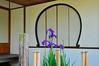 Dark irises (the.bryce) Tags: japan hiroshima shukkeiengarden