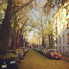 all the leaves fell at once (bvrdc) Tags: street autumn square dc washington ginkgo squareformat rise swann iphoneography instagramapp uploaded:by=instagram