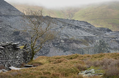 Lone tree (Mike Ashton) Tags: industry rock wales welsh slate llanberis quarry