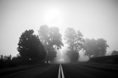 Heading Into the mist (Mike Wood Photography) Tags: trees blackandwhite mist tree monochrome fog vanishingpoint blackwhite foggy mikewoodphotography