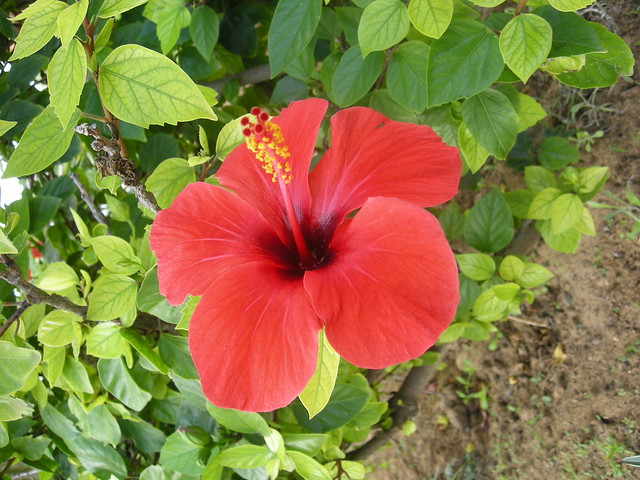 Ibiscus, voyage en TUNISIE