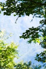 MonteBaldo289X2067 (Luigi Consiglio) Tags: colore natura giallo aurora nebbia albero autunno rosso paesaggi paesaggio bosco ambiente esterno foresta faggio hornbeam nessuno vegetazione quercia tranquillit protezione cambiamento orizzontale riservanaturale lucesolare sentierodicampagna bellezzanaturale deciduo