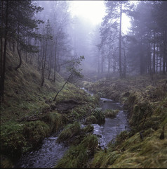 Mountain creek (BG Sixtyniner) Tags: mist mountain color 6x6 film home fog analog forest self square woods slide hasselblad medium format kit positive reverse e6 f4 120mm cfi developing 500cm carlzeiss jobo 3bath macroplanar tetenal divibare cpp2