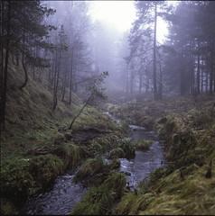 Mountain creek (BG Sixtyniner) Tags: mist mountain color 6x6 film home fog analog forest self square woods slide hasselblad medium format kit positive reverse e6 f4 120mm cfi developing 500cm carlzeiss jobo 3bath macroplanar tetenal divčibare cpp2