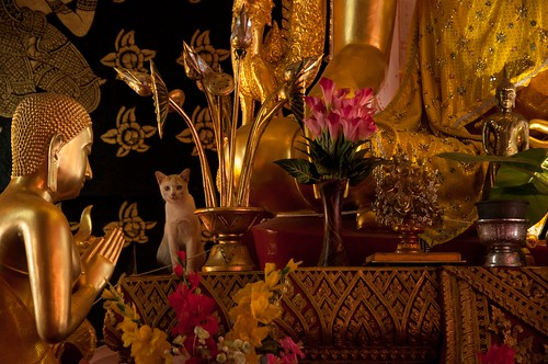 """Chiang Mai • <a style=""""font-size:0.8em;"""" href=""""http://www.flickr.com/photos/63093989@N06/16306468522/"""" target=""""_blank"""">View on Flickr</a>"""