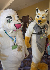 _DSC0718 (Acrufox) Tags: midwest furfest 2015 furry convention december hyatt regency ohare rosemont chicago illinois acrufox fursuit fursuiting mff2015