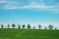 Baumreihe am Horizont (GerWi) Tags: trees sky tree nature clouds outdoor natur felder wiesen himmel wolken row bume baumreihe