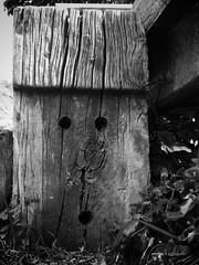 (aspidistraphy) Tags: blackandwhite monochrome face mono surprise unexpected bnw surprisedface