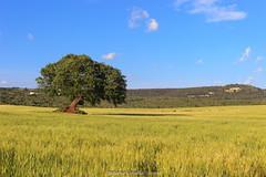 Gravity (Antonio Ciriello) Tags: italy verde green nature canon landscapes italia natura 1750 tamron puglia apulia 600d massafra tamron1750 cernera eos600d canoneos600d rebelt3i citignano
