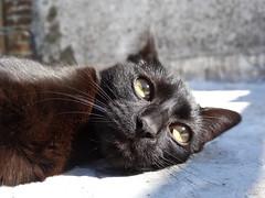 DSC00735 (Camila Monticelli) Tags: baby black cute cat kitten sony negro kitty gato kira gatita gatito hx300