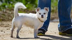SSSE FR DIE HANDTASCHE GEEIGNETE WAUWAUS AM FLUGHAFEN (rentmam1) Tags: dog hund