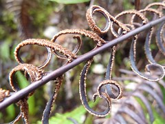 Curls (Jasmine MJ) Tags: plant nature britishcolumbia tofino