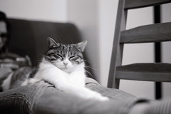 pennichella! (quercus cerris) Tags: cat germany 50mm nikon chat bn riposo gatto allemagne sonno germania pellicola nikonf90