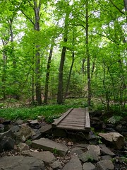 Hiking in the Middlesex Fells ((Jessica)) Tags: park bridge green nature boston hiking massachusetts brook reservation medford middlesexfells