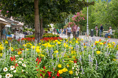 Flora (Matt H. Imaging) Tags: ©matthimaging flowers flora street meran merano sudtirol altoadige summer holiday sony slt sonyalpha slta55v a55 tamron tamron18270pzd