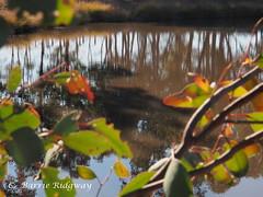 Reflections (BRDR images) Tags: reflections australia canberra naturephotography australiancapitalterritory namadginationalpark