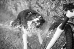 _DSC3097.jpg (desdemontrove) Tags: dog perro