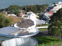 Albatross (<aj>) Tags: devonport