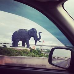 #iamawildlifephotographer #ช้างมอง #elephant  #การถ่ายรูปขณะขับรถเป็นความสามารถเฉพาะตัวที่ไม่ควรเอาเยี่ยงอย่าง #ป่าคอนกรีต #อ่านว่า คอ นก รีต #ไม่เกี่ยวกับช้าง #แต่เกี่ยวกับวงแหวน #และจริงๆเมฆหนามาก