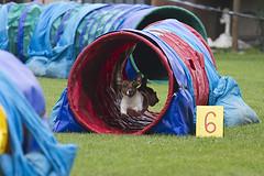 Run! (Pavel Vanik) Tags: dog animal canon jump competition run agility 7d czechrepublic bohemia 70300lis