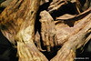 Exposición Momias (Landahlauts) Tags: museum dead andalucía body andalucia muerte granada ritual museo preserved mummy andalusia andalusien mummies bodies sciencemuseum preservation andalousie momia parquedelasciencias cadaver momias deceased andalusie andaluz craneo embalsamado andaluzia embalmed funerario difunto incorrupto andaluzja andaluzio dessiccated consorcioparquedelasciencias embalsamamiento andalouzia andalusiya exposicionmomias costumbresfunerarias
