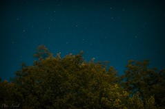 Contrasti (Rita Muratori) Tags: trees sky italy colors alberi night dark stars star evening woods nikon san lorenzo cielo colored shooting mm colori starry notte sera buio bosco notturno stelle 18105 stellato cadente d90 colorato