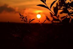 1415548675597 (raimundkress) Tags: rot landscape licht nikon sonnenuntergang wolken blume landschaft sonne bltter baum lichtstimmung
