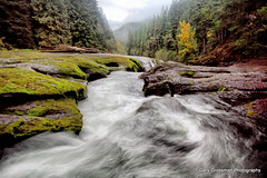 Autumn Waters (Gary Grossman) Tags: autumn fall forest landscape moss whitewater fallcolor nationalforest cascades lewisriver giffordpinchotnationalforest lowerlewisriverfalls