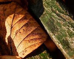 Texturas de otoo (Carlos Javier Prez) Tags: hoja madera nikon tamron texturas pintura ocre tamron90mm deterioro nikond90