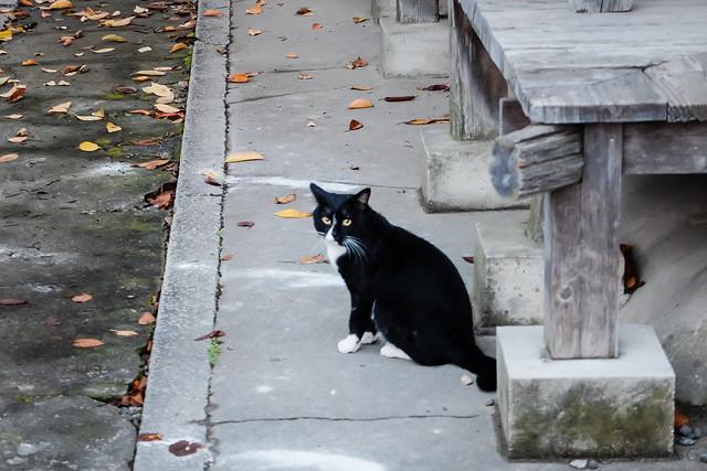 Today's Cat@2014-11-11