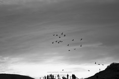Le Voyage (Anne Sarthou - Homophotographicus Sapiens Sapiens) Tags: roses pelicans birds pigeons ducks peacock cock ibis vultures sparrows eagles oiseaux hens coqs canards seaguls msange poules mouettes hirondelles cigognes faucons moineaux milans rapaces autruches vautours aigles canetons goelands paons etourneaux hrons chocards spatules balbusards