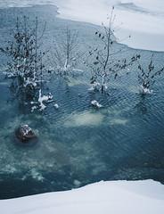 winter flood (miemo) Tags: trees winter sea snow tree ice nature finland helsinki europe flood olympus shore omd uunisaari em5 panasonic1235mmf28