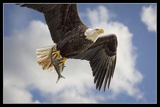 Close Encounter of the BIRD kind...{Explored}