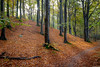The shade of trees (Casper-Larsen) Tags: autumn sun tree forest canon leaf shadows hill explore 6d 24105mm ef24105mmf4lisusm abigfave