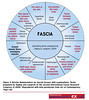 43DY32_1 (sportEX journals) Tags: rehabilitation fascia massagetherapy musculoskeletal sportex sportsinjury sportsmassage sportexdynamics sportsrehabilitation biotensegrity