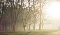 It's All About The Light (Nicolas Vlachos) Tags: park travel trees winter light sun sunlight mist color tree nature misty fog lens landscape geotagged photography 50mm photo nikon warm europe flickr mood shadows natural sofia walk highlights explore bulgaria lensflare flare land bg