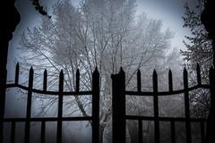 Gate to the frozen park (Artur Tomaz) Tags: tree ice gelo forest gate porto floresta trancoso sincelo