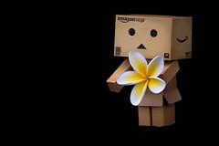 for you... (Bec .) Tags: flowers macro cute canon lol fake 100mm figure frangipani bec oo foryou stealing onblack danbo 450d