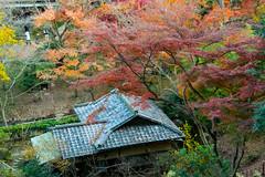 DSC_7639.jpg (d3_plus) Tags: park street autumnfoliage sky nature japan garden scenery outdoor fine sunny  streetphoto yokohama      j4   sankeien  sankeiengarden    nikon1   1nikkorvr10100mmf456 1 nikon1j4