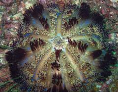 plant underwater (TravelingShapy) Tags: ocean plant underwater pflanze dive picture diving bild tauchen unterwasser ozean