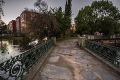 Gaviotas Centinelas (Dovlado) Tags: park autumn trees sunset castelos ro river atardecer rboles otoo estanque vigo jardn lagares castrelospark rolagares