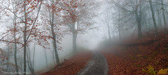 Foggy autumn forest road (Mavroudakis Fotis) Tags: road morning blue autumn light red wild sun sunlight mist tree fall nature beautiful leaves misty fog fairytale forest way season landscape leaf blurry woods colorful branch forrest outdoor hiking path background magic foggy vivid foliage greece trail fairy macedonia fantasy fantasia mysterious environment colored mystical dreamy autumnal mystic pathway