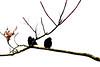 Winter birds - (rotraud_71) Tags: winter birds branches vanagram