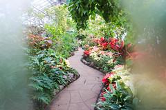 Path in the Garden (SteveC123!) Tags: flowers toronto flower canon garden rebel allen greenhouse stm 18135mm t5i