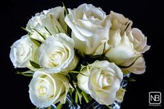 Roosjes (Baeske) Tags: flowers roses flower fleur rose fleurs flora roos nieuwjaar rozen bloemen bloem evenementen