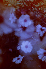 Ghost Flowers (nyctophiliaconsequat) Tags: flowers film photography lomography exposure hand purple double spiritual